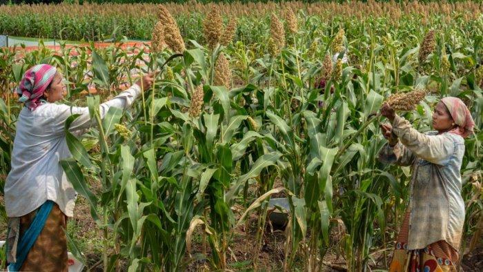The Shiv Sena Led Maha Govt Introduces 3 Bills To Defy Centre's Farm Laws