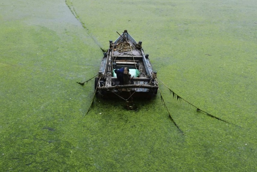 China: Port City Of Qingdao Uses Boats, Scoops To Fight Algae Bloom
