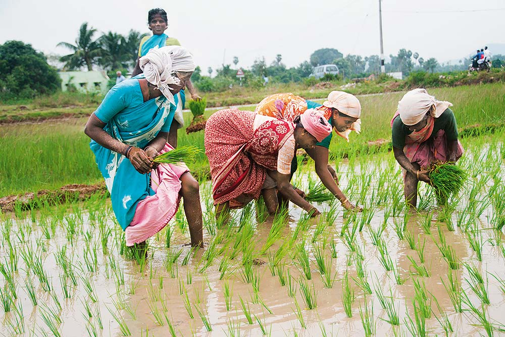 Group Farming Is The Way Forward For Indian Croppers
