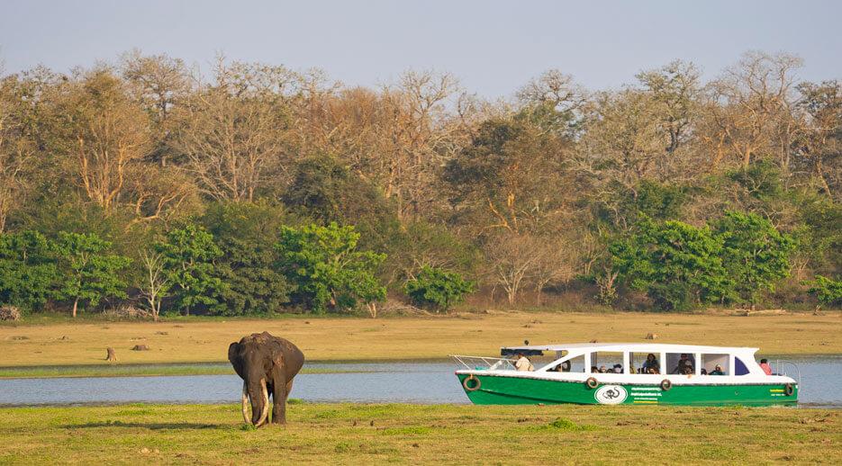 Revenge Tourism: In Between Lockdowns, Karnataka's 'Jungle Lodges & Resorts' Breaks Monthly Records
