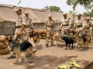 Three Afghan-Returned ITBP Combat Canines To Join Anti-Naxal Operations In Chhattisgarh