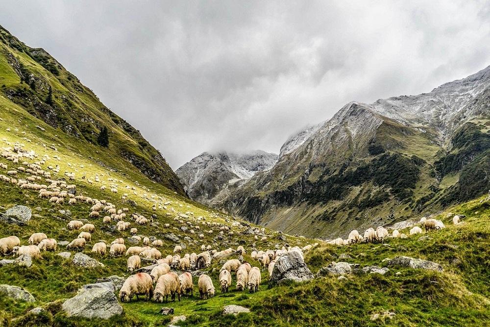 Pastoralists, Original Livestock Keepers Of Civilisation, Pushed To Margins