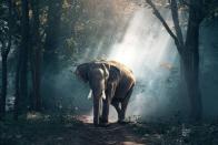 Wild Elephants Trample Man To Death In Chhattisgarh