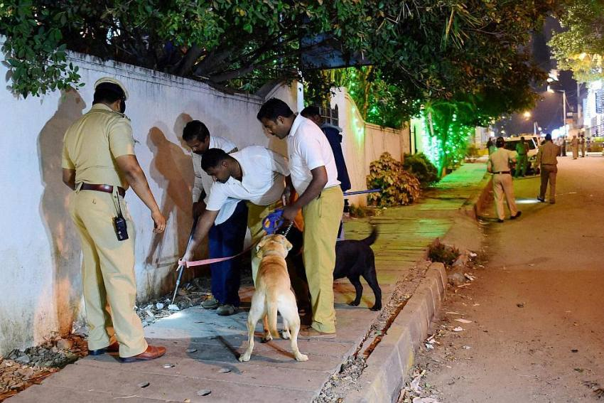 FIR Against Unknown Driver in Maharashtra For Blinding Stray Dog