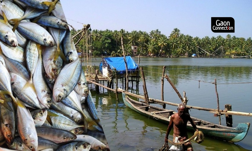 From Fishing To Fish Farming: Future of Fish