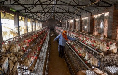 New Techniques To Turn Poultry Feather & Animal Hair To Fertiliser