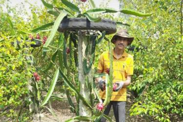 Excited By Praises From PM Modi And CM Adityanath, UP Farmer Grows Dragon Fruits In Barabanki