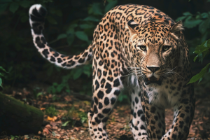 Delhi To Get Its First Wild Animal Rescue Park