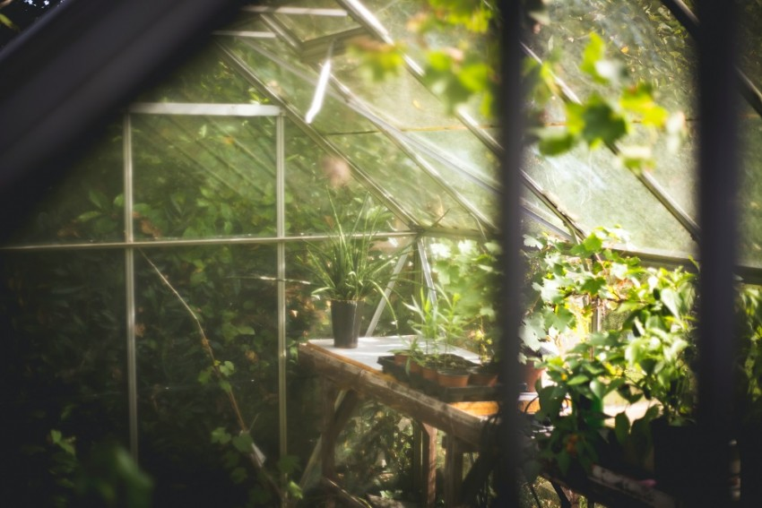 'Greenhouse Farming Should Be Well-Planned Business'