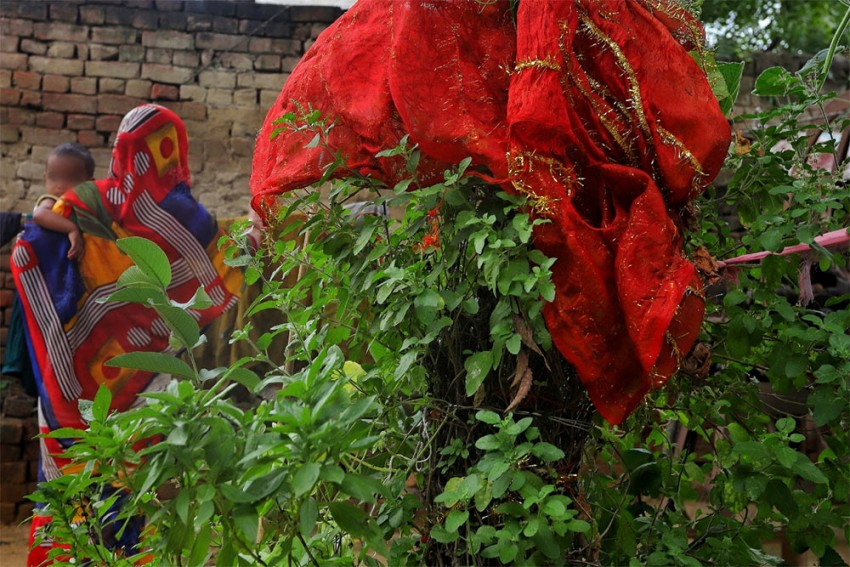 In Her Wake, A Holy Basil Plant Keeps Her Memory Alive