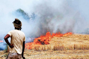 Centre Holds Meeting With States Over Stubble Burning Pollution Mitigation