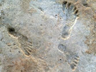 Oldest Human Footprints Discovered In US, About 23,000 Years Old