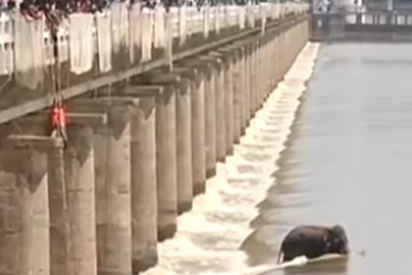Reporter Dies During Live Coverage Of Elephant Stuck In Odisha River
