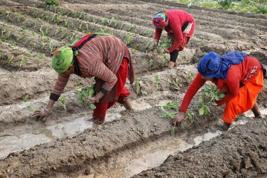 Small Farmers Need Decent Wages: IFAD To World Leaders