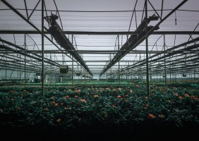 Greenhouse Horticulture Is Expanding At A Rapid Pace, But…