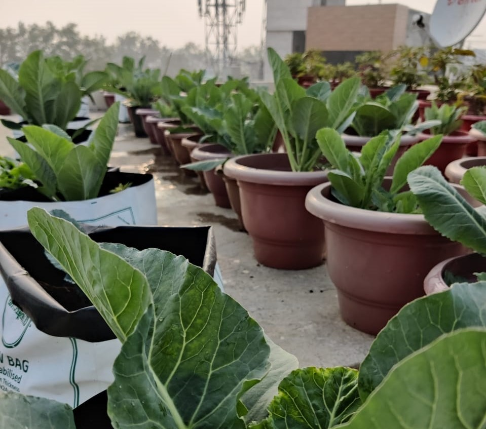 How Green Is My Roof: Terrace Farming Initiatives Gain Ground... Literally!
