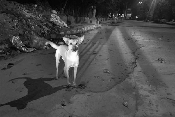 Kota: 60-Year-Old Man Arrested For Allegedly Raping Female Stray Dog