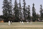 The Sheer Joy And Mass Appeal Of Club Cricket