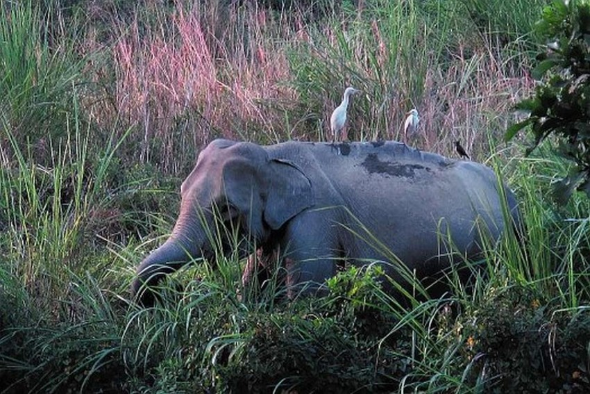 Watch: A Poacher's Court Tries To Save Elephants And Rhinos In Africa