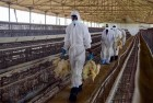 Should You Be Worried About H5N8 Bird Flu? A Quick Guide To The Alphabet Soup