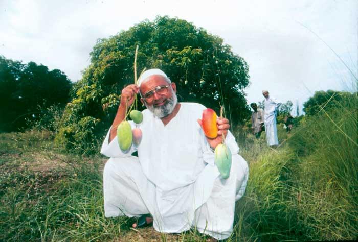 The Mango Maharaja