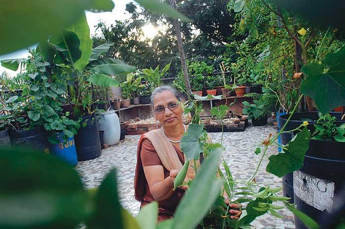 Radish On The Rooftop Outlook India Magazine