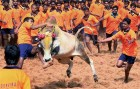 SC Rejects Tamil Nadu's Plea For Review Of Jallikattu Verdict