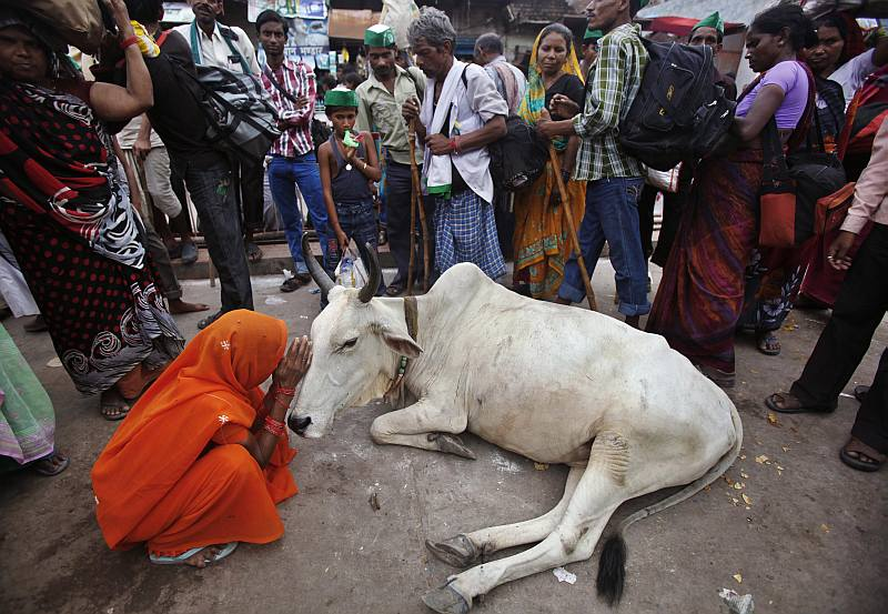 Cow Slaughter Is Mainly Bull
