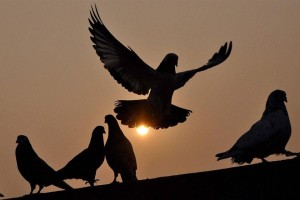 No Communal Angle, Says Delhi Police After Altercation Over Pigeon Flying Fight Leaves One Injured