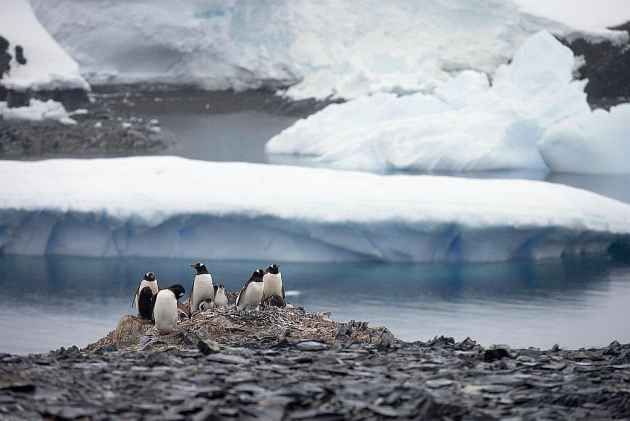 OPINION | 'In Deep Freeze? From Fish To Hydrocarbons, India Have A Lot To Claim In Antarctica'