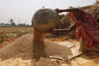 The Plight Of Punjab—I