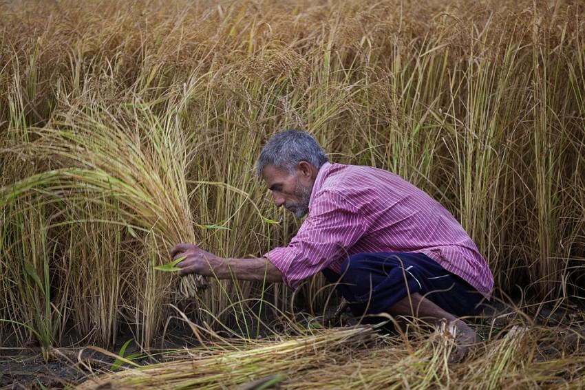 The Plight Of Punjab—II