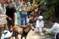 <b>Sacrament of meat</b> A sacrificial goat at a Hindu ritual in an Uttarakhand village