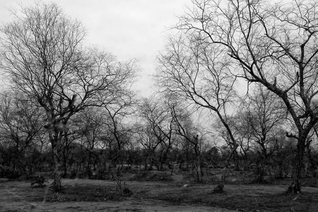 Ghostwood Acres