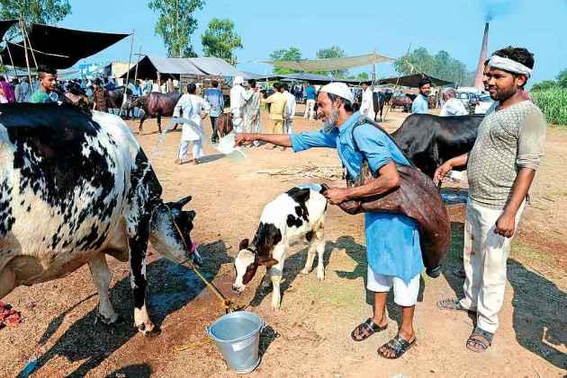 Cow Soldiers Ride Buff Bazaar
