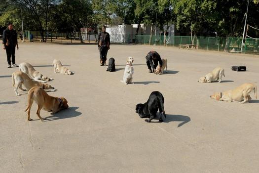 Ringa Ringa Doggies