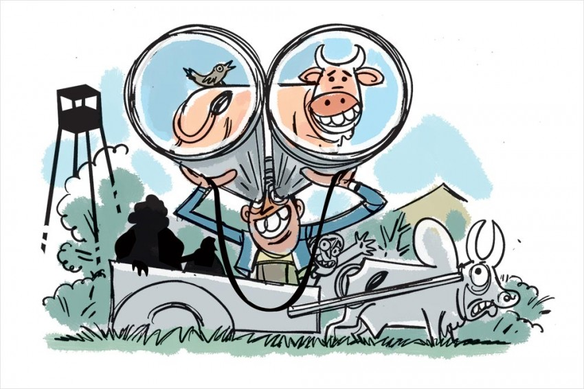 Care For A Cow Safari In Jaipur?
