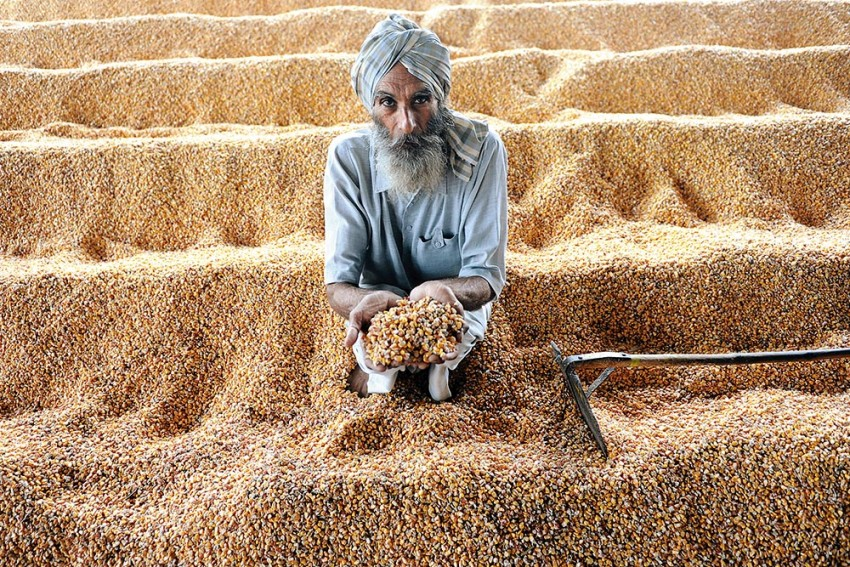 Much-Hyped Hike In Minimum Support Price May Not Benefit Farmers