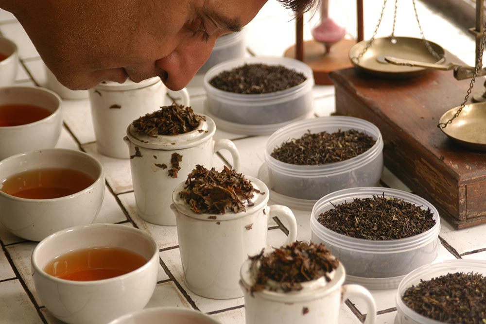 Why Darjeeling Tea Is Losing Its Aroma