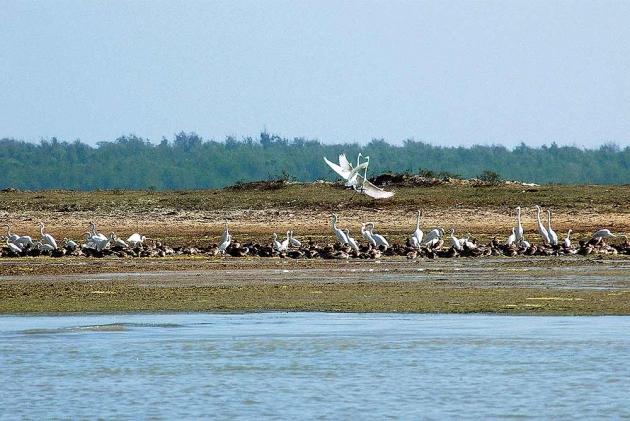 Aerodrome Project On Chilika Lake Sparks Ecological Fears