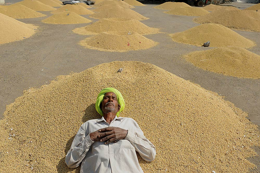 In Poll-Bound Madhya Pradesh, Farmers' Anger Grows Despite A Good Harvest