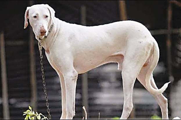 The Hounds Of Hindustan