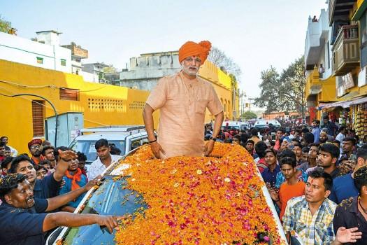 Leader In Marigold