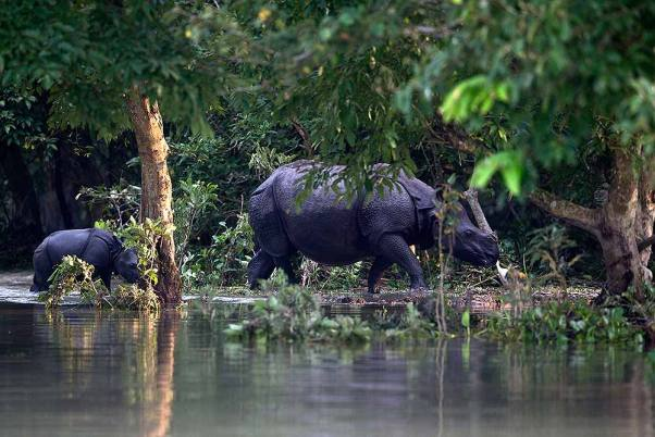 Outlook India Photo Gallery - National Parks