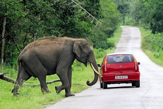 Man Vs Wild: Politics Over Night Ban On Traffic Through Bandipur National Park Turns Grim