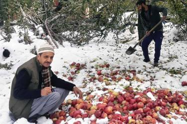 J&K: Snowfall, Heavy Rain Wreaks Havoc On Apple Orchards, Five Dead