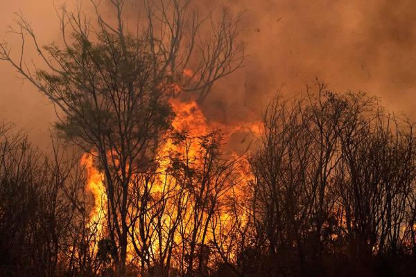 Fire In Brazil's Cerrado