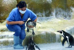 Two New Additions To Humboldt Penguin Colony Bring  Cheer At Mumbai Zoo