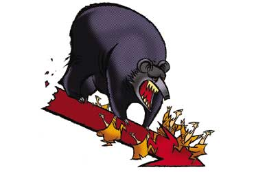 Bears Come Calling