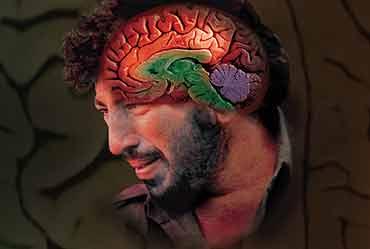 Bile In The Brain